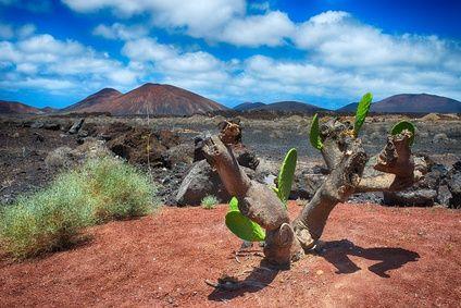 Lanzarote, Canary Islands, Spain 1
