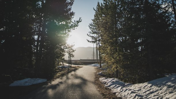 Silnice vedoucí lesem